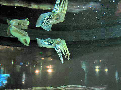 fisk som lyser af sig selv