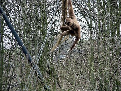 zoo ebeltoft brystforstørrelse sverige