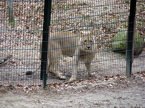 swinger Danmark zoo ebeltoft